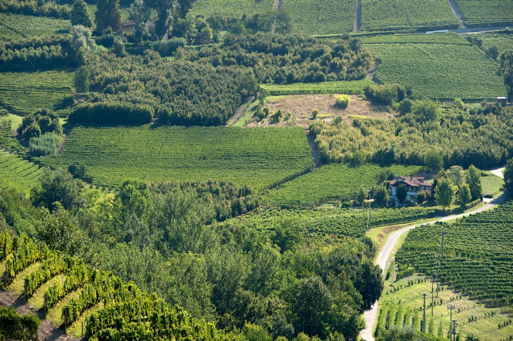 Vineyards In The Barolo And Barbaresco Zones